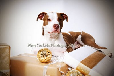 Pet Photographer long island